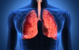 lungs-human-body-respiratory